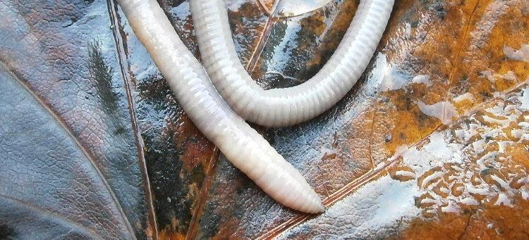 vers worms biologie